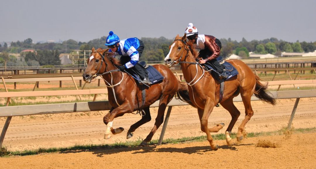 Horses work on Randjesfontein track.